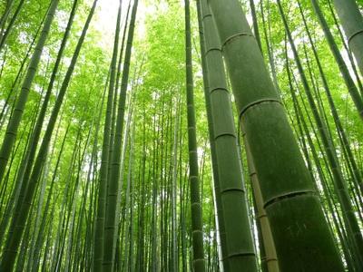 竹林画像2.jpg